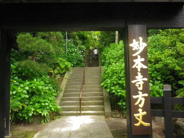 01) 本堂側の門と階段。西洋紫陽花は蕾。例年通り、盛の頃に再訪しよう。_ 16.06.04 鎌倉「妙本寺」西洋紫陽花よりも先に、ヤマアジサイ/ガクアジサイが見頃の日。
