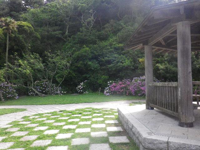 E03) _ 16.06.19  紫陽花が咲く 「鎌倉海浜公園稲村ガ崎地区」 の朝