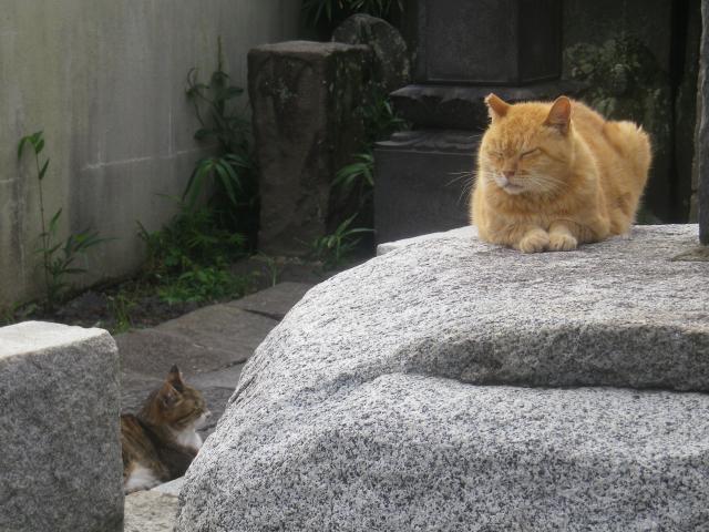 02-1) ' ジュディ・ダイブル '(本名 ' ブータロー ' )   _ 16.09.14 アソコの アレ