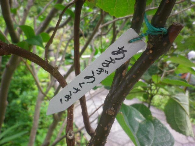 04-1) あまぎのくさき _ 16.09.21 鎌倉「大巧寺」 秋彼岸