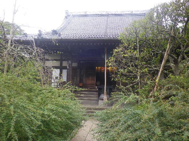 04) _ 16.09.29 鎌倉「宝戒寺」 ' 萩の寺 ' とも呼ばれるが、今年の花は台風に甚振られた。