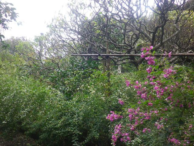 07) _ 16.09.29 鎌倉「宝戒寺」 ' 萩の寺 ' とも呼ばれるが、今年の花は台風に甚振られた。