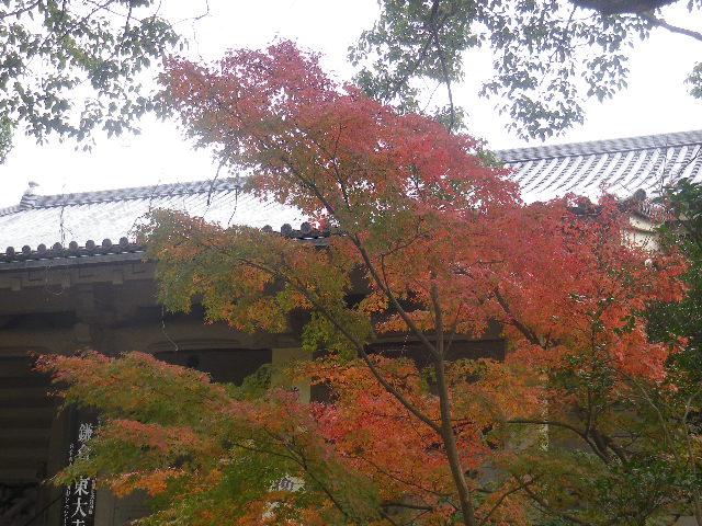 04-1) 「鎌倉国宝館」周辺 _ 16.11.28 初冬の 鎌倉「鶴岡八幡宮」