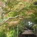 IMGP0116 _ 16.11.26 鎌倉山「扇湖山荘」公開を観覧した