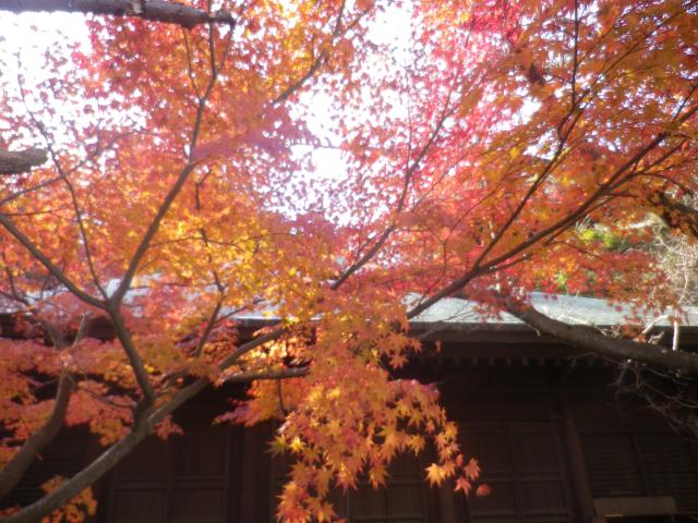 1-02)  16.11.30 初冬の 鎌倉「長勝寺」