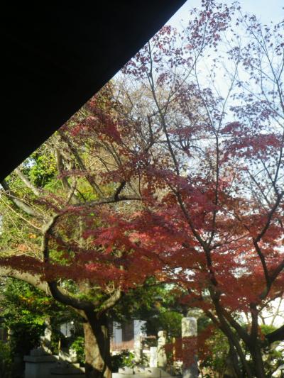 1-04)  16.11.30 初冬の 鎌倉「長勝寺」