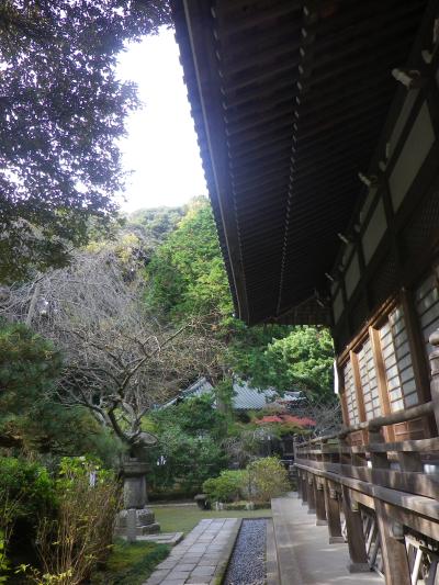 6-05)  16.11.30 初冬の 鎌倉「安国論寺」