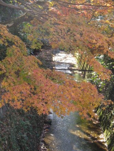 03)  16.12.02 鎌倉  ' 二階堂川 ' 沿いの紅葉