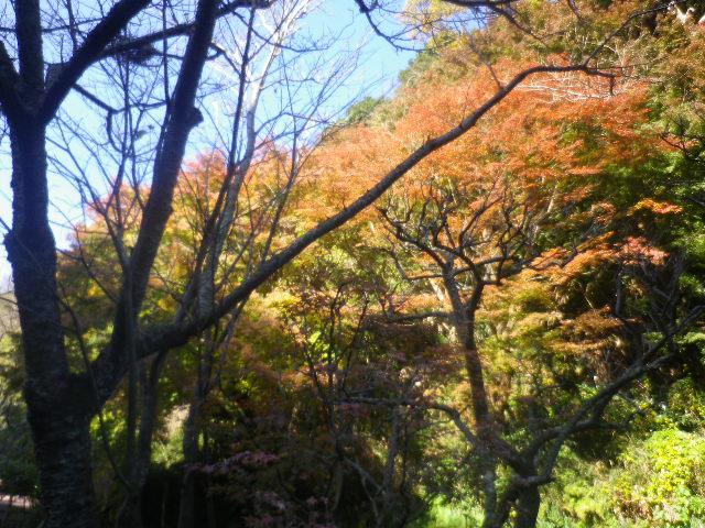 02-3)   16.12.02 初冬の 鎌倉「瑞泉寺」