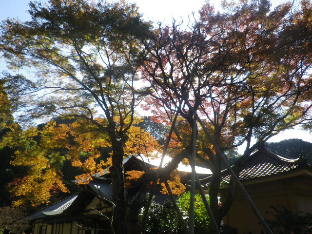 06-2)   16.12.02 初冬の 鎌倉「瑞泉寺」
