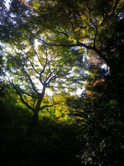 08-2)   16.12.02 初冬の 鎌倉「瑞泉寺」