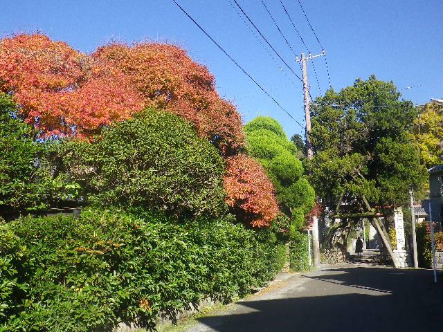 00-ex.)   鳥居手前直近民家の紅葉を借景させていただいた。 16.12.02 初冬の 鎌倉「荏柄天神社」