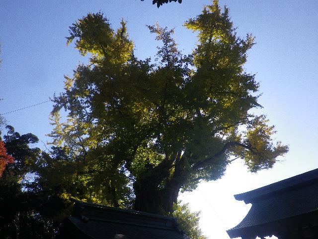 02-1) 16.12.02 初冬の 鎌倉「荏柄天神社」