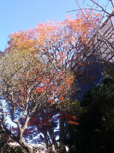 01-1)   16.12.02 鎌倉「大巧寺」 初冬の紅葉と黄葉