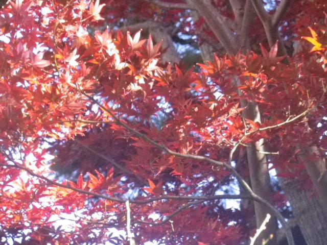 01-2)   16.12.02 鎌倉「大巧寺」 初冬の紅葉と黄葉