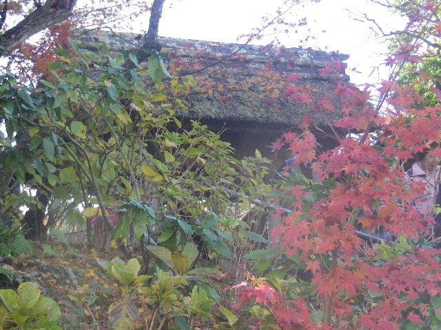 01-1)   16.12.05 初冬の 鎌倉「東慶寺」
