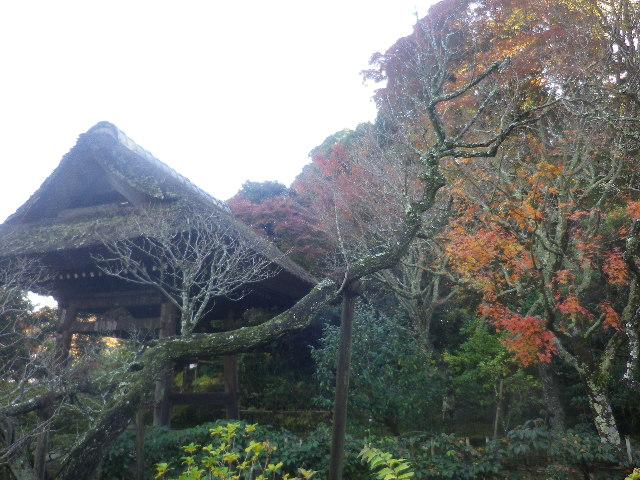 02-1)   16.12.05 初冬の 鎌倉「東慶寺」