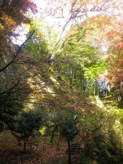 07-1)   期間限定公開場所以外で ' イワガラミ ' を覗くことができる場所から、上方の山を仰ぎ観る。 _ 16.12.05 初冬の 鎌倉「東慶寺」
