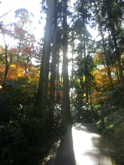 09)   16.12.05 初冬の 鎌倉「東慶寺」