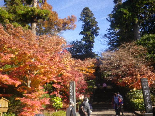 A01-1)   16.12.05 初冬の 鎌倉「円覚寺」