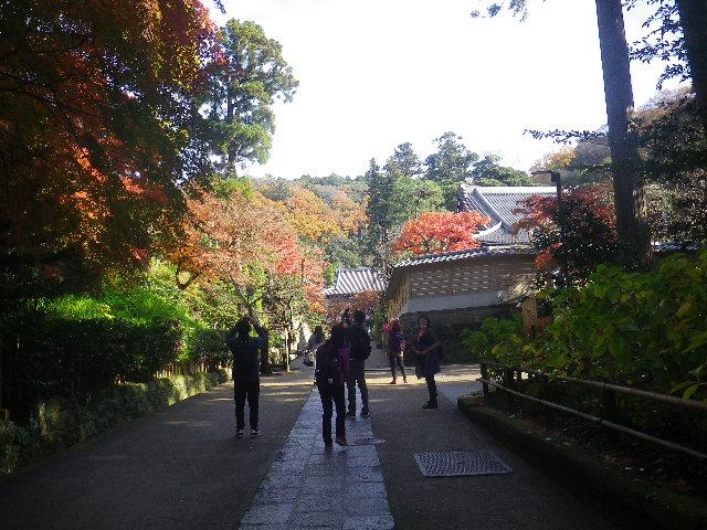 D01-1)  16.12.05 初冬の 鎌倉「円覚寺」