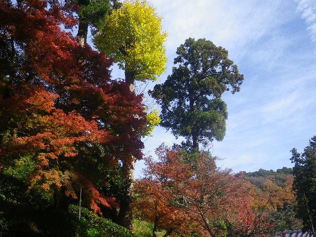 D01-2)  16.12.05 初冬の 鎌倉「円覚寺」