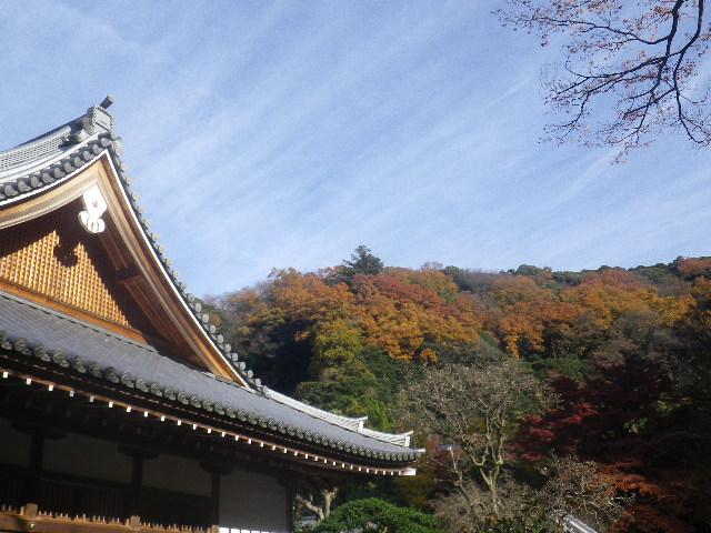 H01)  16.12.05 初冬の 鎌倉「円覚寺」