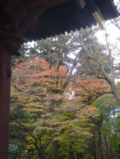 03)   16.12.15 鎌倉「妙本寺」 冬至を迎えようとする頃