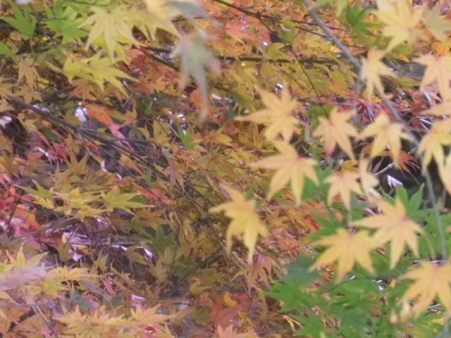 F1-02) 「宝戒寺橋」    16.12.15 冬の 東勝寺橋/東勝寺跡 ~ 宝戒寺橋 周辺 _ 鎌倉市小町