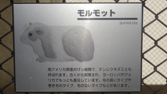 02-02b) モルモット 17.01.01 平成二十九年 元旦 逗子「披露山公園」
