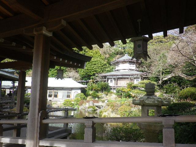 02)  記主庭園   17.02.11 鎌倉「光明寺」 鳥が河津桜の蜜を吸っていた