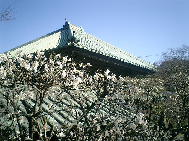 04_17927103544_o 04) 祠堂から唐門屋根と仏殿屋根を観る。