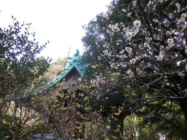 07-1)   17.02.18 鎌倉「光則寺」 梅咲く頃