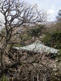 04)    17.02.18 鎌倉「瑞泉寺」  毎年同じような写真だけど、確実に十年前とは違う景観。