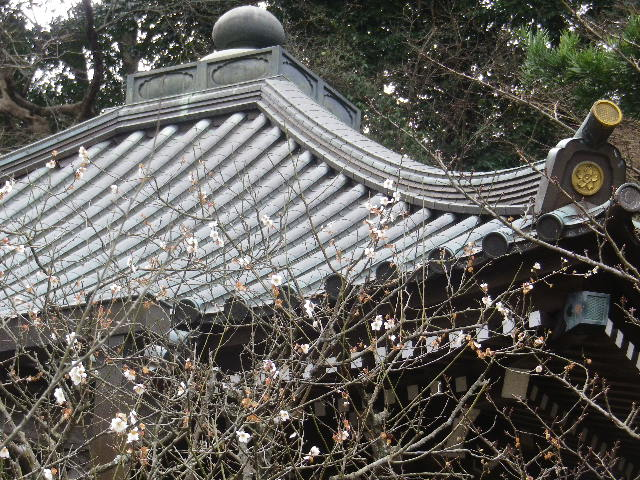 09-02)   17.02.22 鎌倉「安国論寺」 枝先に咲く梅の繊細さが際立つ頃