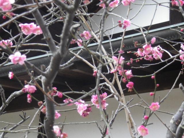 04-2)    17.02.22 鎌倉「浄光明寺」 立春から半月後の境内