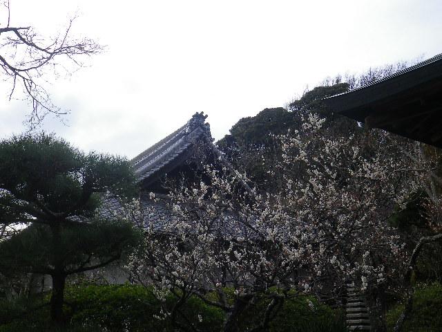 06-1)    17.02.22 鎌倉「浄光明寺」 立春から半月後の境内