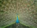 """07_06.07.14紫陽花が終った""""花の寺""""「光則寺」"""