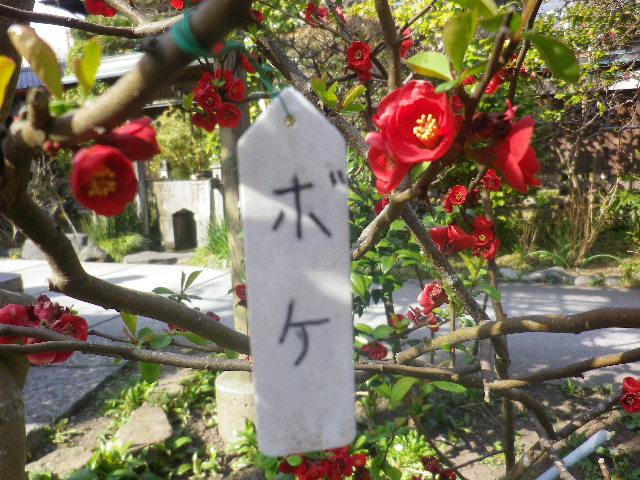 13-1) ' #ボケ ' _ 17.03.25 日蓮宗系単立寺院 長慶山 大巧寺(だいぎょうじ)