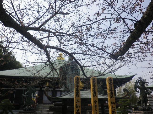 02-1)   17.03.30 鎌倉「長勝寺」 桜が開花し始めた頃