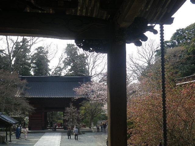 11)  ' 祖師堂 ' から ' 二天門 ' 方向   17.04.02 鎌倉「妙本寺」の桜