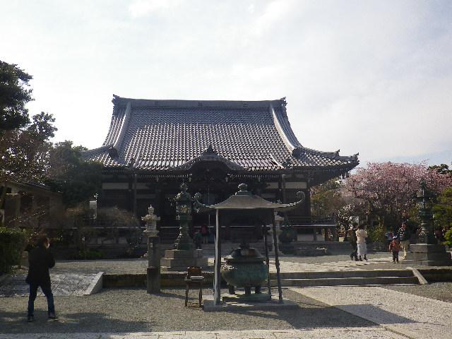 02)    17.04.02 鎌倉「本覚寺」の桜