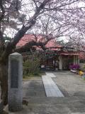 01-1)    17.04.02 鎌倉「向福寺」の桜