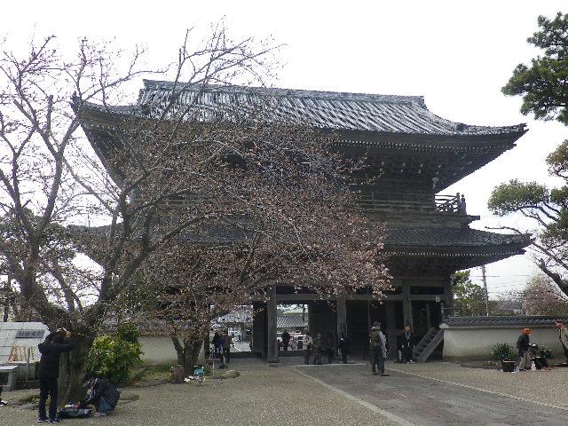 04-1)   17.04.02 鎌倉「光明寺」の桜