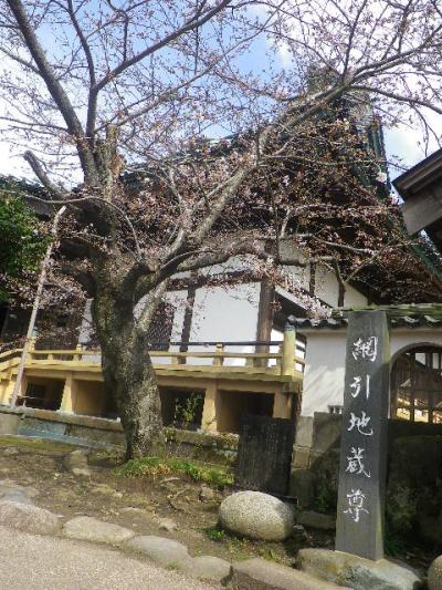 07)   17.04.02 鎌倉「光明寺」の桜