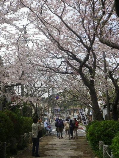 04)    17.04.10 鎌倉「宝戎寺」 例年よりも開花が遅かった参道の桜