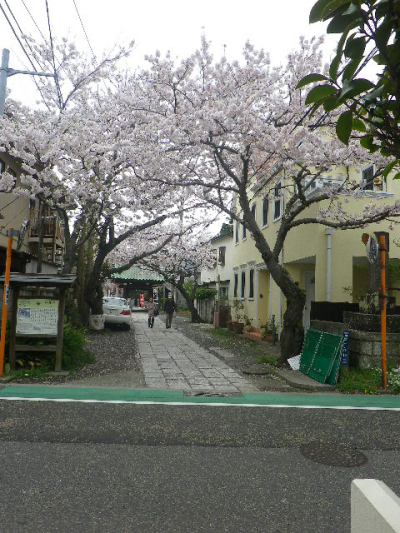 01)    17.04.10 鎌倉「妙隆寺」の桜