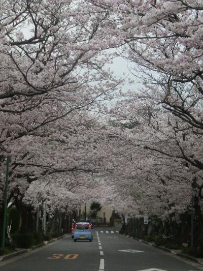 05)    17.04.10 「鎌倉逗子ハイランド(逗子ハイランド)」の桜