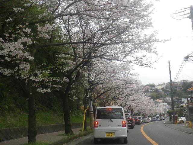07)    17.04.10 「鎌倉逗子ハイランド(逗子ハイランド)」の桜