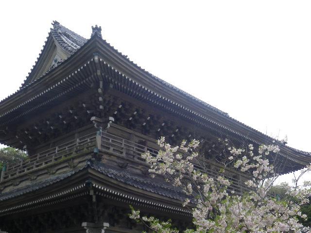 02)    17.04.10 鎌倉「光明寺」の桜